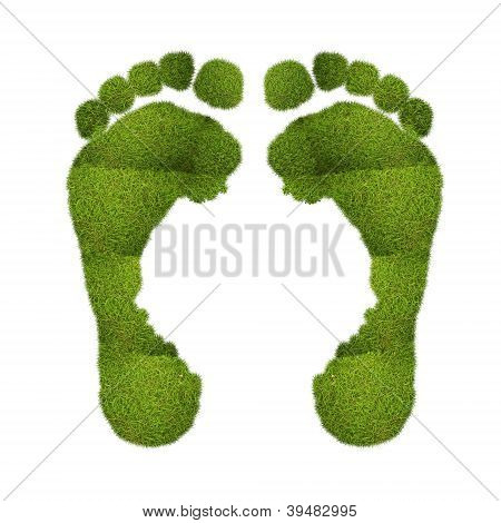Green Footprints.