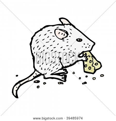 white mouse nibbling cheese