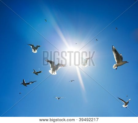 Flock of birds in sky on sunny day