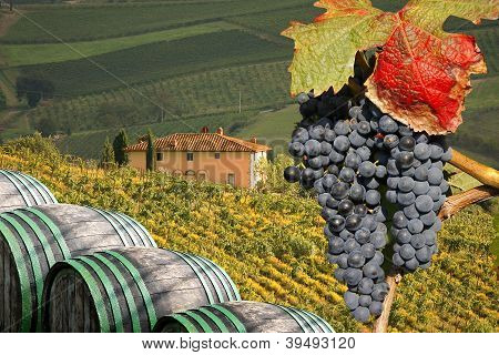 Chianti vineyard in Tuscany, Italy