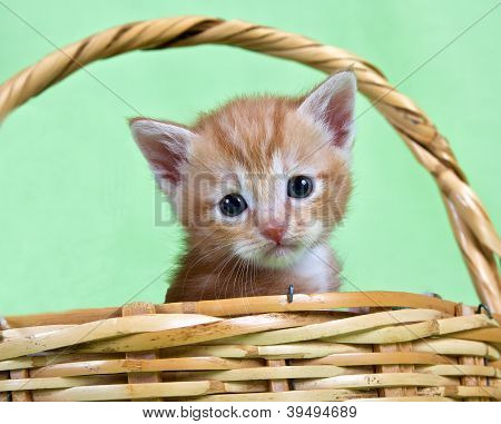 Ginger Kitten Sitting In A Basket