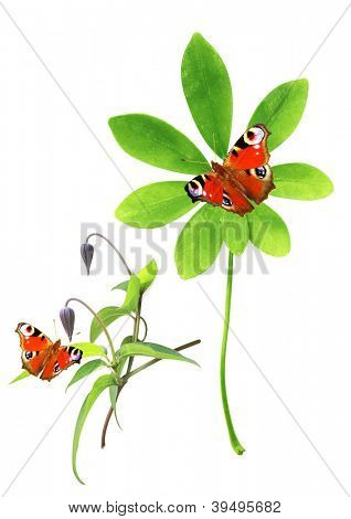 Set of green leaves and butterfly. Isolated over white