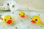 stock photo of bubble-bath  - Bright yelllow rubber ducks floating in bubbles with daisies - JPG