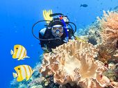 stock photo of undersea  - Scuba diver underwater close to coral reef - JPG