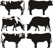 stock photo of cattle breeding  - breeding cattle for meat and milk  - JPG