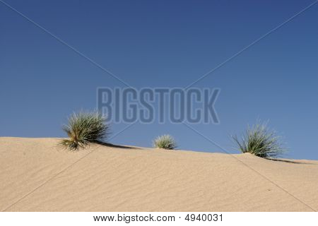 Grass In The Desert