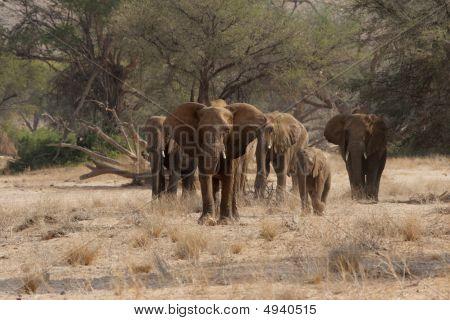 Wüste Elefanten