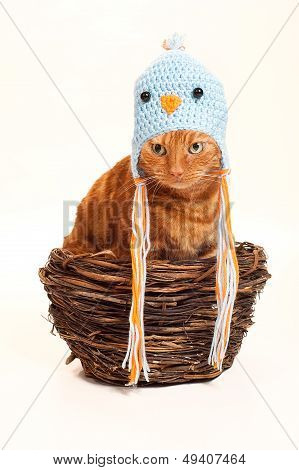 Orange Cat In A Nest Disguised As A Bird