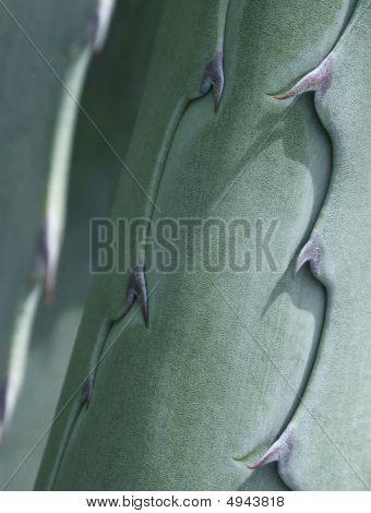 Cacti Detail