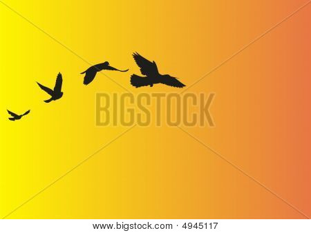 illustration of a bird flying over the sky