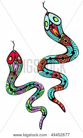 Two Patterned Snakes