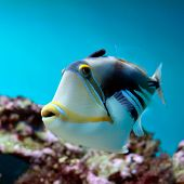picture of undersea  - underwater image of tropical fish - JPG