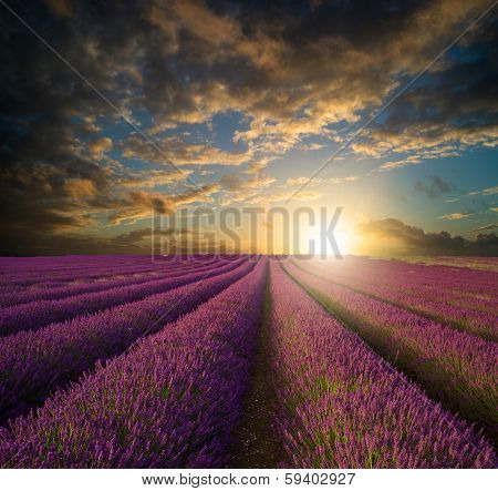 Vibrant Summer Sunset Over Lavender Field Landscape