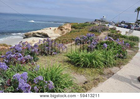 La Jolla; San Diego; California; Usa