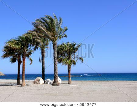 Palmeras en la Playa de Carboneras