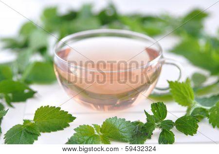 Herbal Tea in a Glass - stinging nettle (Urtica dioica) tea