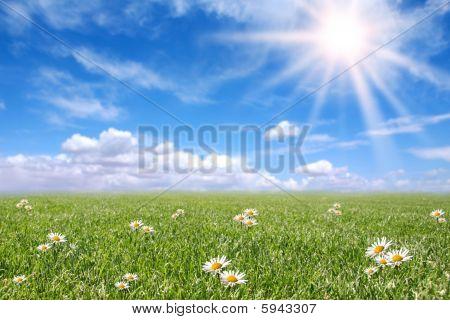Serena campo soleado Prado en primavera