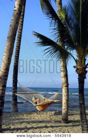 Beneath Palm Fronds