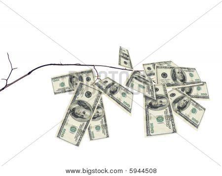Rama de árbol de dinero