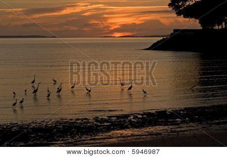 sunrise with egrets
