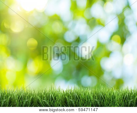 Blurred nature background. In foreground the green grass.
