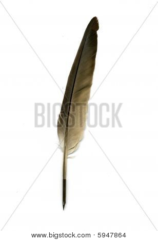 Feather Pen On White Background
