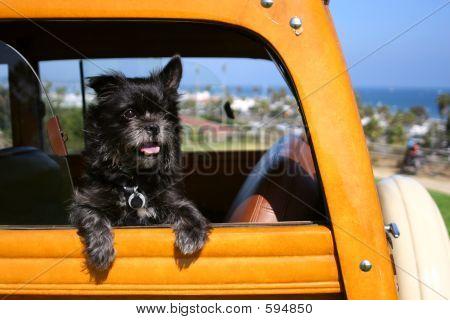 Woodie Surfer Dog
