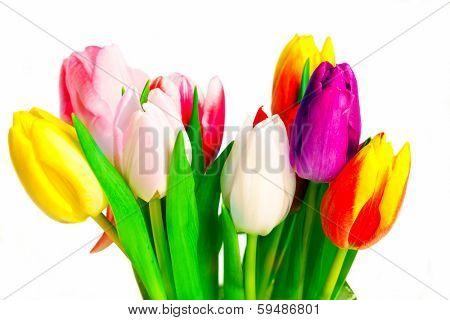 Bunch of tulips on white background,studio-shot
