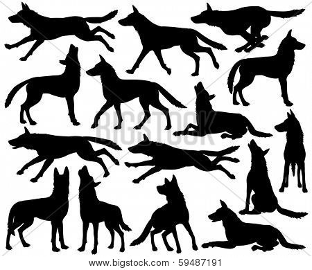 Set of editable vector silhouettes of wolves in different poses