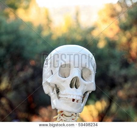 A Genuine Real Plastic Human Skull missing a tooth smiles a toothy grin at You The Viewer as if to say Buy This Image. Human Skulls are an important part of being human and keep our brains safe inside