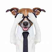 stock photo of seeing eye dog  - hiding covering crazy dog with tie and dumb glasses - JPG