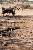 stock photo of ox wagon  - ox wagon with drag chain and yokes with cattle in the background - JPG