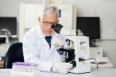 stock photo of microscope slide  - Senior male researcher examining microscope slide in medical lab - JPG