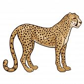 stock photo of cheetah  - Vector illustration of a cheetah isolated on a white background - JPG