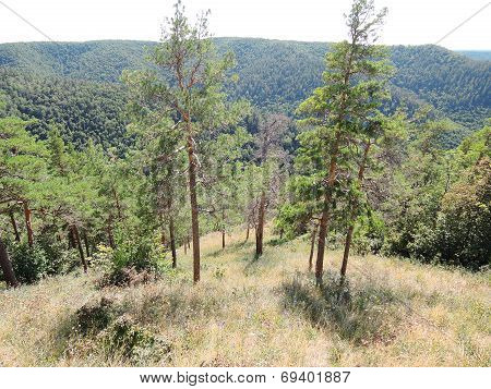 Forest Clearing In The Forest On The Mountain
