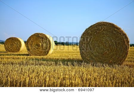 bale of hay on agriculture field