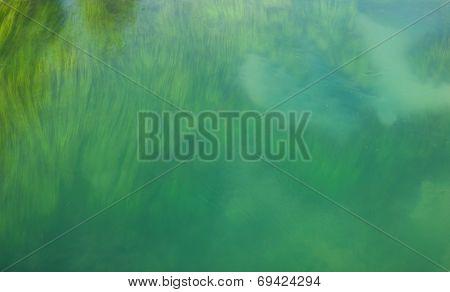 River Bed Vegetation