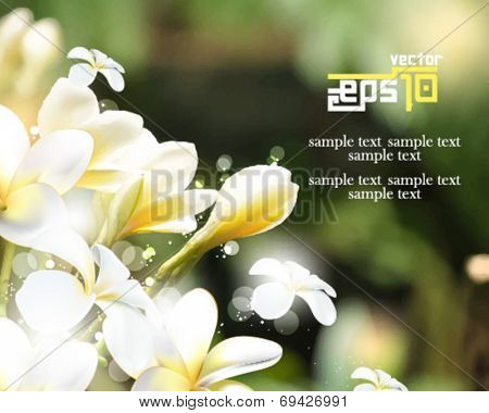 eps10 vector beautiful realistic flower elements background