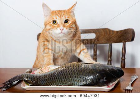 Orange Cat And A Big Fish
