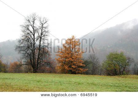 Autumnal contrast.