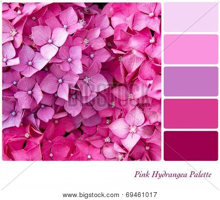 Hydrangea flower background colour palette with complimentary colour swatches