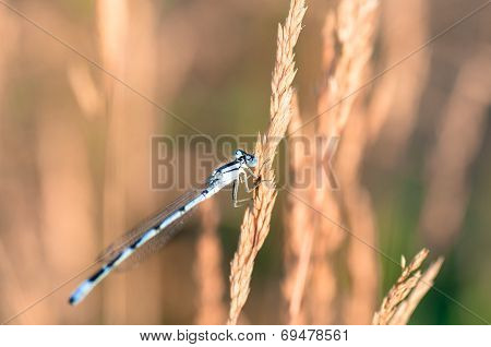 Extreme Closeup Of Dragonfly On Meadow