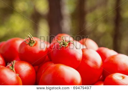 Tomatoes Outdoors