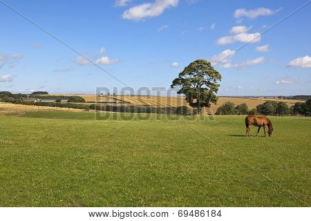 Yorkshire Wolds Farmland