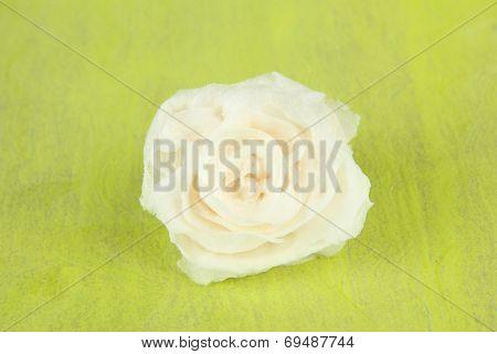 Sugar rose, on color background