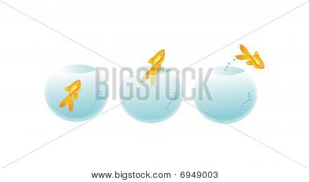 Peixe dourado em garrafa