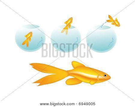 Golden Fish In Bottle