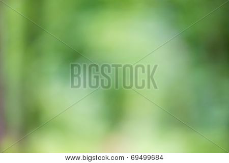 Blurred Fresh Green Nature Background