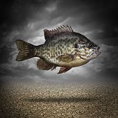 picture of aquatic animal  - Fish out of water as a business or lifestyle metaphor for adapting to changes in the environment as an aquatic animal floating above dried cracked ground as a symbol of crisis management and overcoming challenges as climate change - JPG
