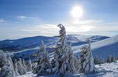 picture of zakarpattia  - Dragobrat mountain and sky - JPG